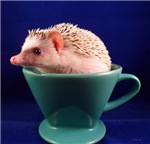 .hedgie in a cup.