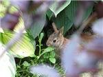 .hiding bunny.