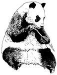 Panda Chimera2