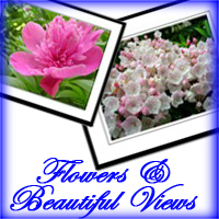Flowers and Beautiful Views