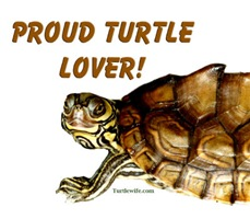 Proud Turtle Lover