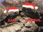 Bah Humbug Santa Turtles