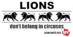 Lions Don't Belong In Circuses