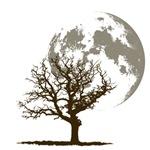 Dead Tree Moon