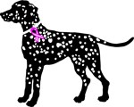 Dalmatian Breast Cancer Support
