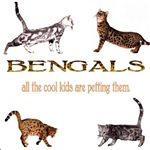 Bengals: all the cool kids are petting them