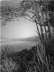 Hatch Pond - Mist - B&W