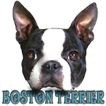 click to view Boston Terriers