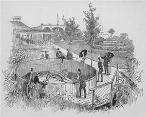 1885~Spanish Fort Alligator Tank