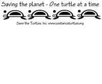 One Sea Turtle at A Time