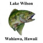 LMB Lake Wilson