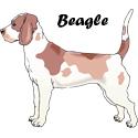 Beagle T-shirt, Beagle T-shirts