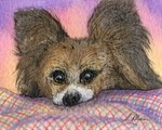 Papillon butterfly dog waiting