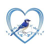 <b>BLUE JAY IN HEART</b>