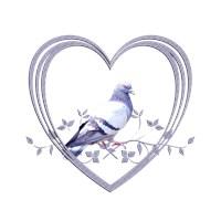 <b>PIGEON IN HEART</b>