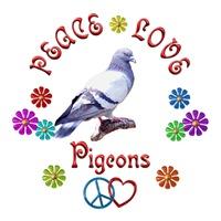 <b>PEACE LOVE PIGEONS</b>