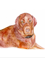 Please Click Here to See Chocolate Labrador Items.