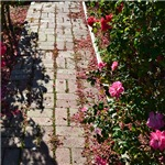 Romantic Rose Path