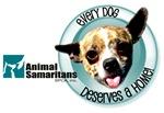 Every Dog Deserves a Home (Bruce)