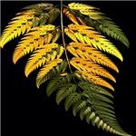 special fern