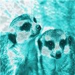 Meerkats,POPart, aqua