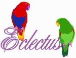 Eclectus
