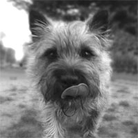 Cairn Terrier Shop!