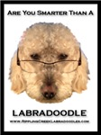Are You Smarter Than A Labradoodle?