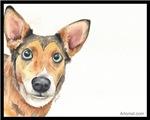 Ziva the Multi Mix Dog