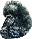 Black Poodle Portrait Unique Gifts Items