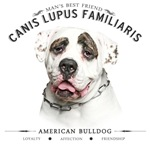 Man's Best Friend - American Bulldog