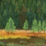 Pine Trees 11