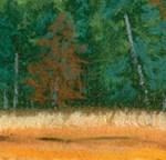 Pine Trees 8