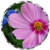 Flower calendars