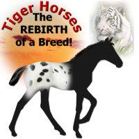 Tiger Horses
