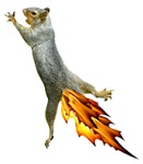 Fire Tail Squirrel