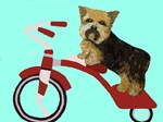 Yorkshire Terrier Dog on Red Tricycle