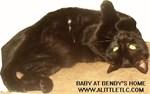 Baby the Black Cat