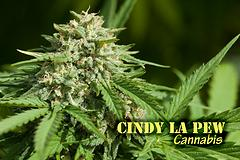 Cindy La Pew (with name)