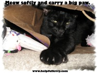 Carry a Big Paw