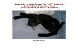 Adopt a Pet #1