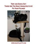 Fix Your Felines
