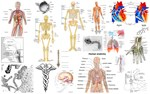 Human Anatomy Identification