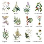 Herb Identification Chart
