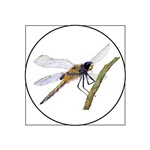 Hairy Dragonfly Insect
