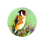 Goldfinch Bird