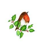 Robin Bird and Holly