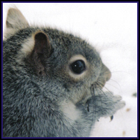 SQUIRREL T-SHIRTS & GIFTS
