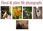 Floral & plant life photographs