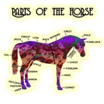 Parts of the Horse Chart